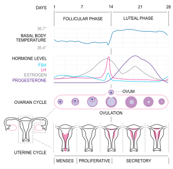 best of Sperm function caused effect Progesterone